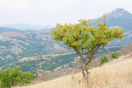 hillside: little green tree on a hillside Blend