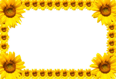 Frame of yellow blooming sunflowers and white background