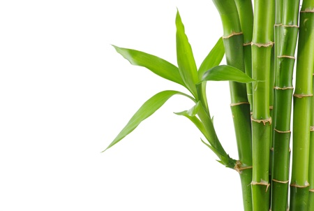 Bamboo isolated on a white photo