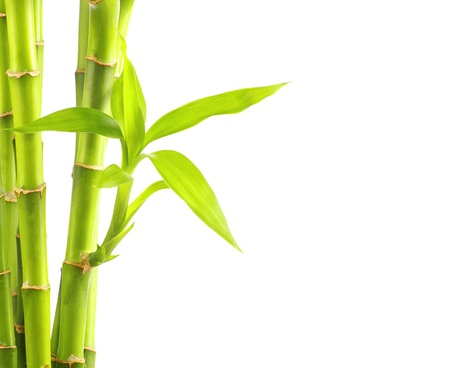 bamboo leaves: Bamboo isolasted on white background