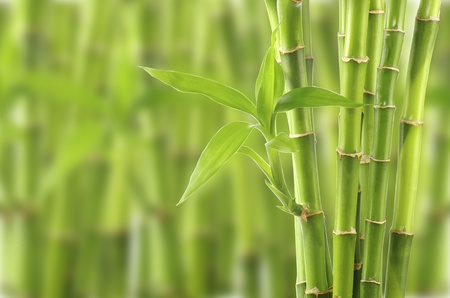 Bamboo background Stock Photo - 12662295
