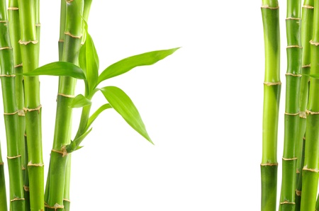 bamboo leaves: bamboo isolated on white