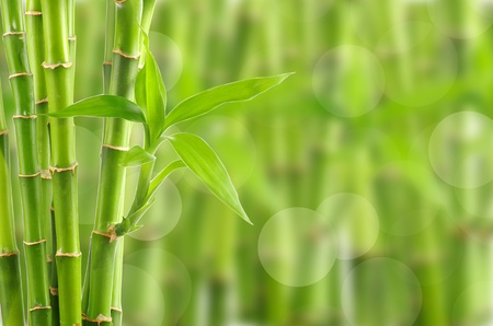 Bright Bamboo background with copy space photo