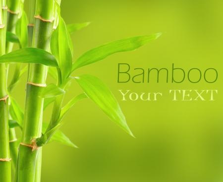 bambu: Fondo de bamb� con copia espacio