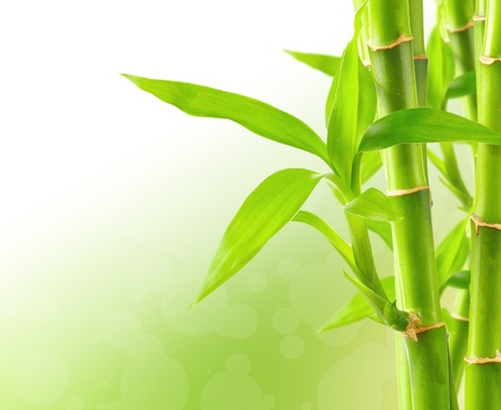 feng shui: Bamboo background with copy space