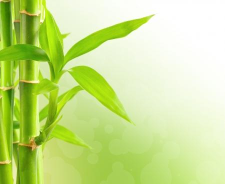 Fondo de bambú con copia espacio