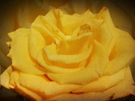 Rose. Retro style. photo