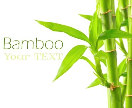 Bamboe achtergrond met een kopie ruimte Stockfoto
