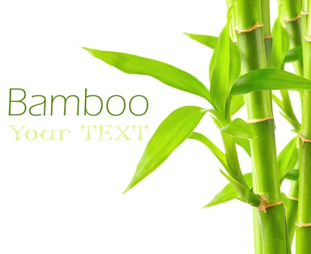 bamboo: Bamboo background with copy space