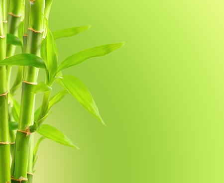 Bamboo background with copy space photo