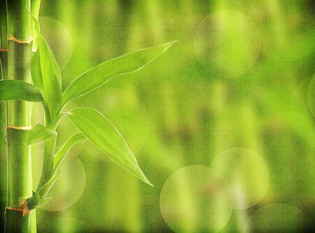 grunge bamboo background photo