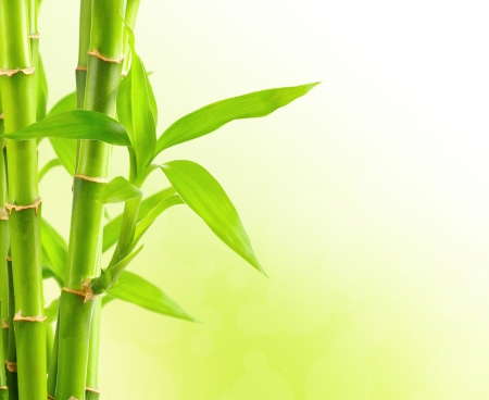 fengshui: Bamboo background with copy space