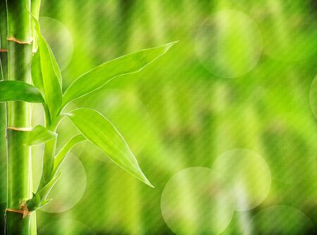 grunge bamboo background photo