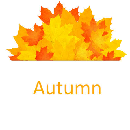 Autumn background. photo