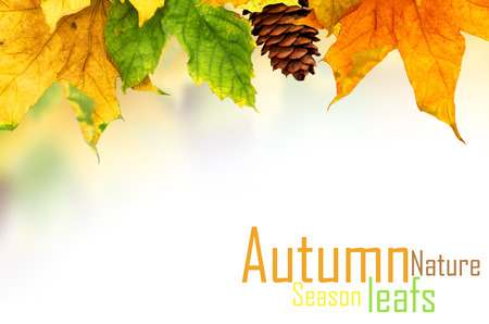 autumn background: Beautiful autumn background with maple leaves Stock Photo