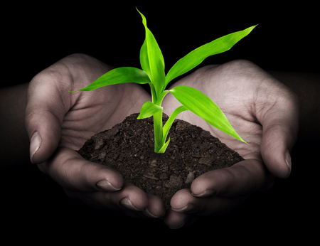 replant: plant in hands Stock Photo