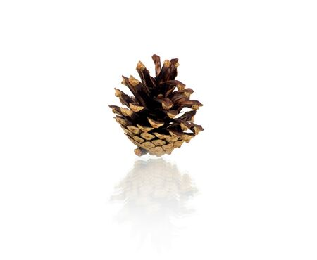 pomme de pin: Pine cone isolated on white, clipping path included Banque d'images