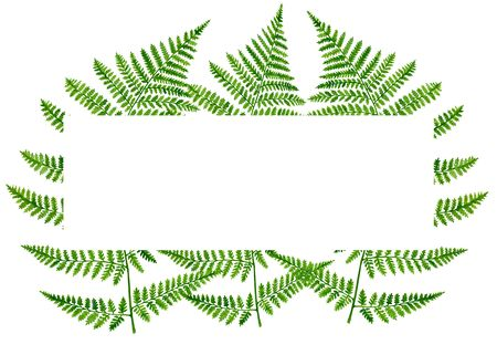 Watercolor fern leaves rectangular frame. Hand drawn forest plants template with space for text for invitation, wedding, card, save the date, banner Stock Photo