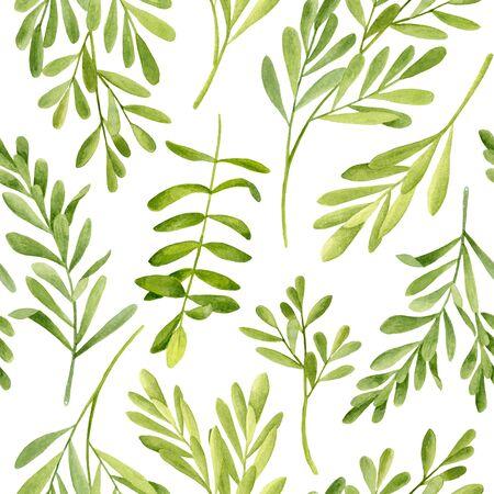Árbol de té de acuarela deja patrones sin fisuras. Ilustración dibujada a mano de Melaleuca. Planta medicinal verde aislada sobre fondo blanco. Hierbas para cosmética, envase, textil, aceite esencial. Foto de archivo