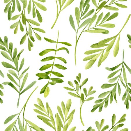 Watercolor tea tree leaves seamless pattern. Hand drawn illustration of Melaleuca. Green medicinal plant isolated on white background. Herbs for cosmetics, package, textile, essential oil Reklamní fotografie
