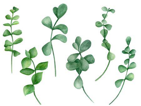 Aquarell Silberdollar Eukalyptuszweige eingestellt. Handbemalte Pflanzen mit runden Blättern. Elemente isoliert auf weißem Hintergrund für Design, Textil, Karten, Dekoration, Einladung