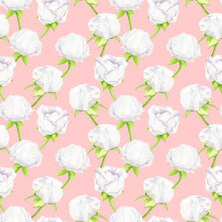 White watercolor Peony flower and buds seamless pattern. Hand drawn illustration on pink background. Design for greeting card, wallpaper, invitation, wedding decoration, wrapping paper, printing