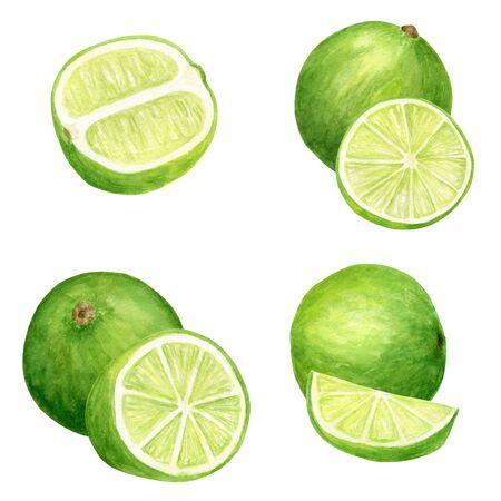 Conjunto de acuarela lima. Ilustración botánica dibujada a mano de rodajas, frutas cítricas verdes aisladas sobre fondo blanco Foto de archivo