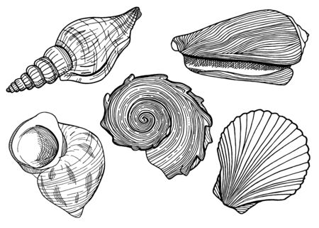 Set of black and white seashells. Hand drawn outline vector illustrations of underwater shells. Nautical elements isolated on white background for cards, logo, decoration, coloring books, print