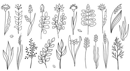 Flowers and plants vector collection. Hand drawn simple outline herbs isolated on white background. Sketch illustration for cards, cosmetics, textile, decoration, invitation