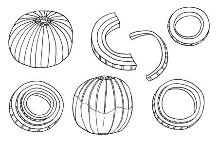 Ensemble d'illustrations vectorielles d'oignons de contour. Ampoule noire et blanche dessinée à la main, anneaux et tranches d'oignon. Dessin de griffonnage d'ingrédients frais