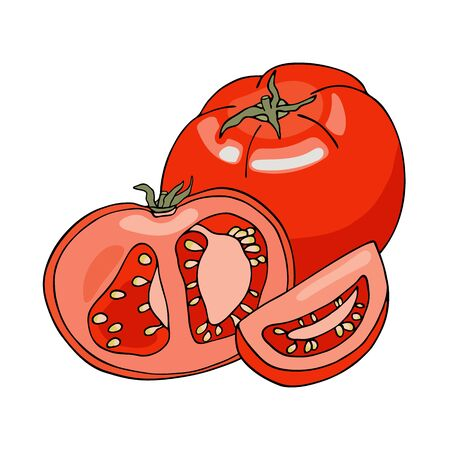 Vector composition with red tomatoes. Hand drawn whole, sliced and half cut fresh tomato vegetables isolated on white background. Food ingredients cartoon doodle drawing. Healthy food, vegetarian