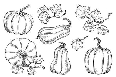 Outline vector pumpkins with leaves set. Hand drawn black contour gourds isolated on white background. Vintage autumn vegetable collection for cards, coloring book, decoration.