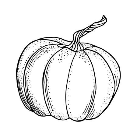 Outline pumpkin vector drawing. Black contour gourd isolated on white background. Autumn vegetable illustration for cards, coloring book, recipe, decoration, Thanksgiving day, Halloween.