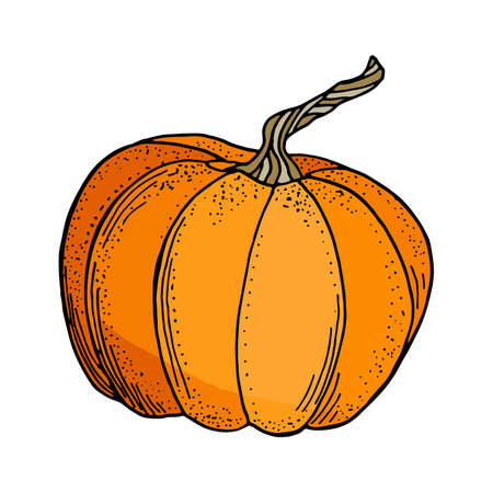 Vector pumpkin illustration. Cute cartoon orange gourd vegetable isolated on white background. Hand drawn graphic illustration for autumn decoration, Thanksgiving day, Halloween, poster. Vector Illustration
