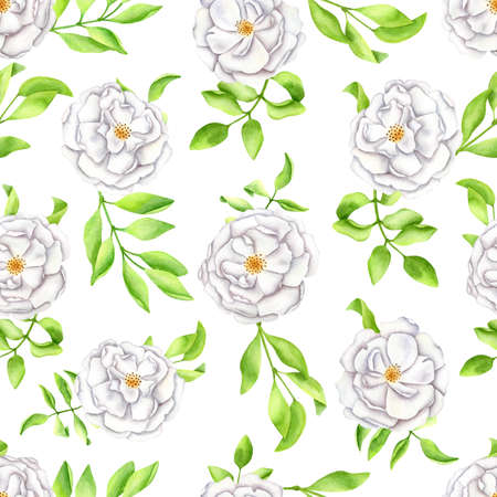 Watercolor white roses with leaves seamless pattern. Hand painted Iceberg rose flowers and buds isolated on white background. Spring, summer floral design for cards, decoration, invitations, print.