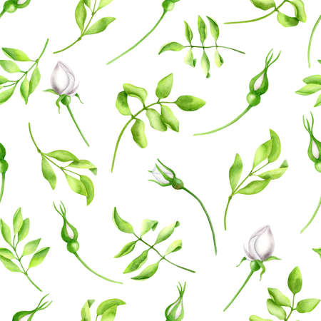 Watercolor white roses with leaves seamless pattern. Hand painted Iceberg rose flowers and greenery isolated on white background. Spring, summer floral design for decoration, invitations, print.