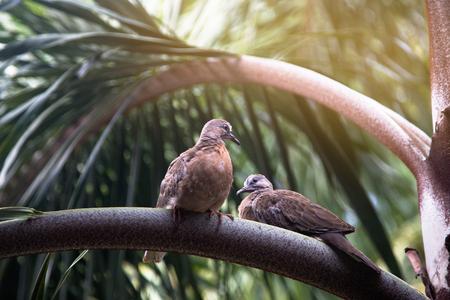 twee vogels zitten op een palmtak