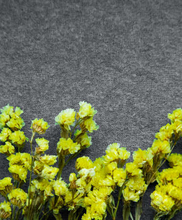 Yellow flowers on a gray background. Copy space. Color trend of 2021. Vertically
