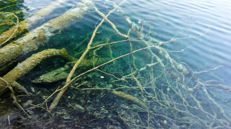 Many snags in crystal water, Plitvice Lakes in Croatia