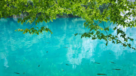 Fish in crystal water, Plitvice Lakes in Croatia Reklamní fotografie