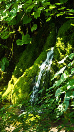 Waterfall and moss, beautiful nature landscape, Plitvice Lakes in Croatia, National Park