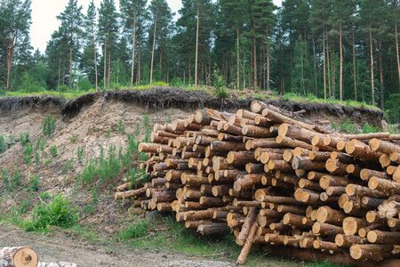 Wood timber logs in pile at a sawmill. Timber harvesting for lumber industry and wooden housing construction.