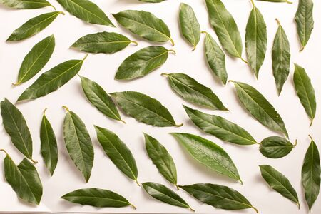 Fresh green bay leaves background. Top view. Flat lay pattern