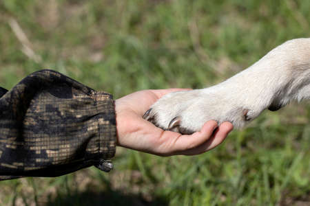 Handshake of dog's paw as sign of man's trust in animal. dog is friend of little child. Give paw command.
