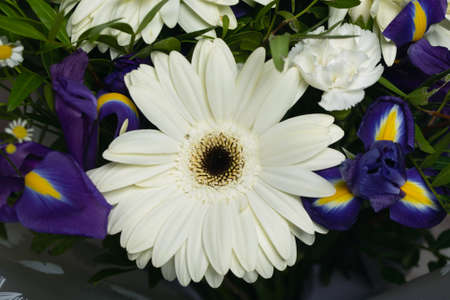 Close-up of large beautiful white gerbera flower surround by purple irises white daisies carnations and greenery. bouquet of flowers or features of floristics. Gift for holiday or poster for store.