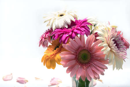 Beautiful gorgeous romantic bouquet of multi colored white and pink gerbera flowers in vase on white background. Flower arrangement of postcards, posters, templates. Birthday gift or pleasant memory. Stockfoto