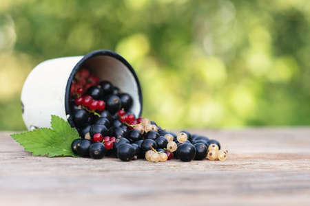 Fresh ripe mix currant berry on wooden table on green natural background. Ecological food. Natural vitamins.