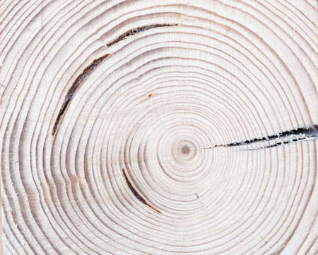 Tree wood cut with annual ring as natural texdtured background Stockfoto