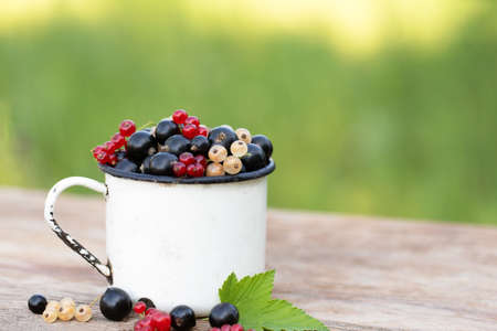 Black, red, white currant in white mug. Mix berries stands on wooden table. Green garden nature background.