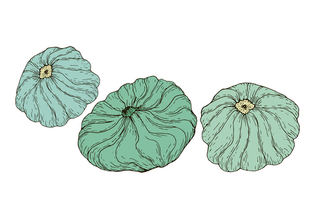 Collection vegetables patisson isolated on white background.Vector hand drawn illustration of  pattypan, squash for adult and childrenart coloring book, art page, textile, print, poster, design.